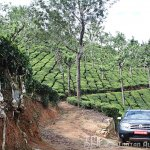 Renault Duster in a tea garden