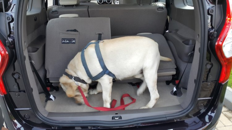 2015 Renault Lodgy Press Drive boot space with dog